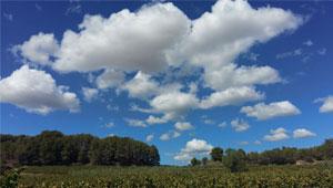 La ruta del vi i el cava