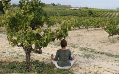 Meditació al Parc (22-10-2017)